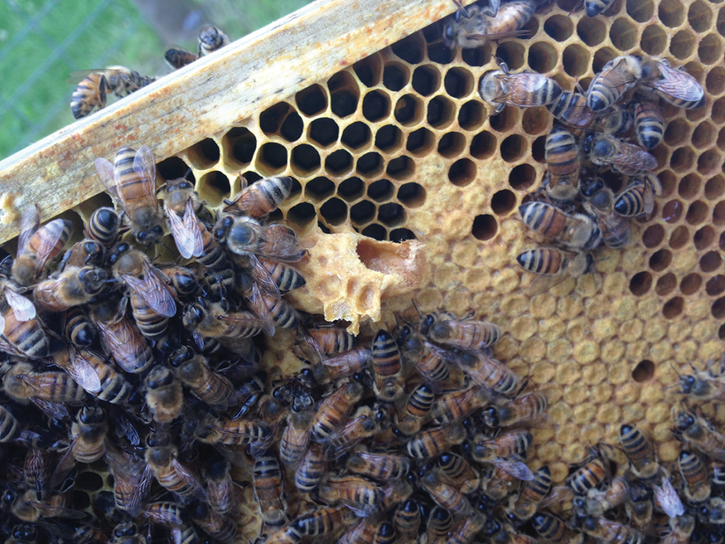 What S Happening In The Hive Bee Culture