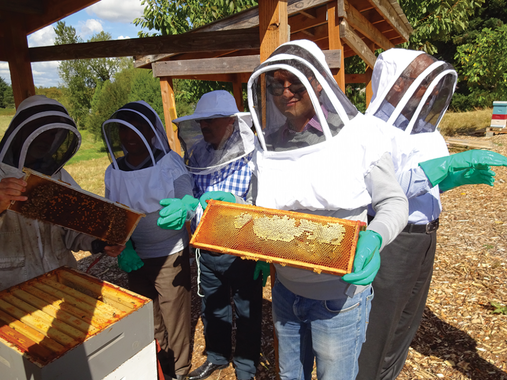 Tim, left, showing spotty brood pattern, visitor showing capped and ripening honey.
