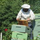 CATCH THE BUZZ – Cheap Imports Hurting Canadian Honey Producers. Familiar Story In The U. S.