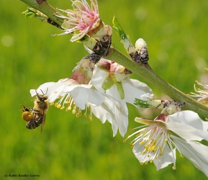 Seeing the Beauty in Pollinators #1 - BUZZ