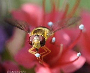 Seeing the Beauty in Pollinators #3 - BUZZ