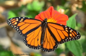 Seeing the Beauty in Pollinators #8 - BUZZ