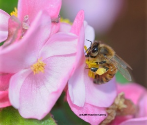 Seeing the Beauty in Pollinators #9