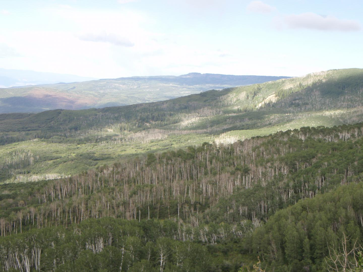 CATCH THE BUZZ – Which Trees Face Death in Drought? Fewer Trees, Certainly Less Honey Bee Food. Study Identifies Tree Traits That May Contribute to Drought Vulnerability