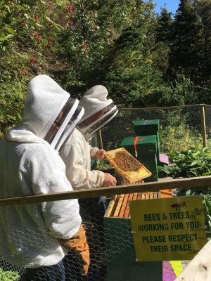 CATCH THE BUZZ – Newfoundland allows importing bees from Western Australia