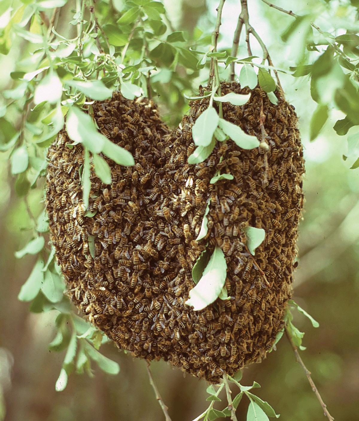 Horde honeys beastess adult model