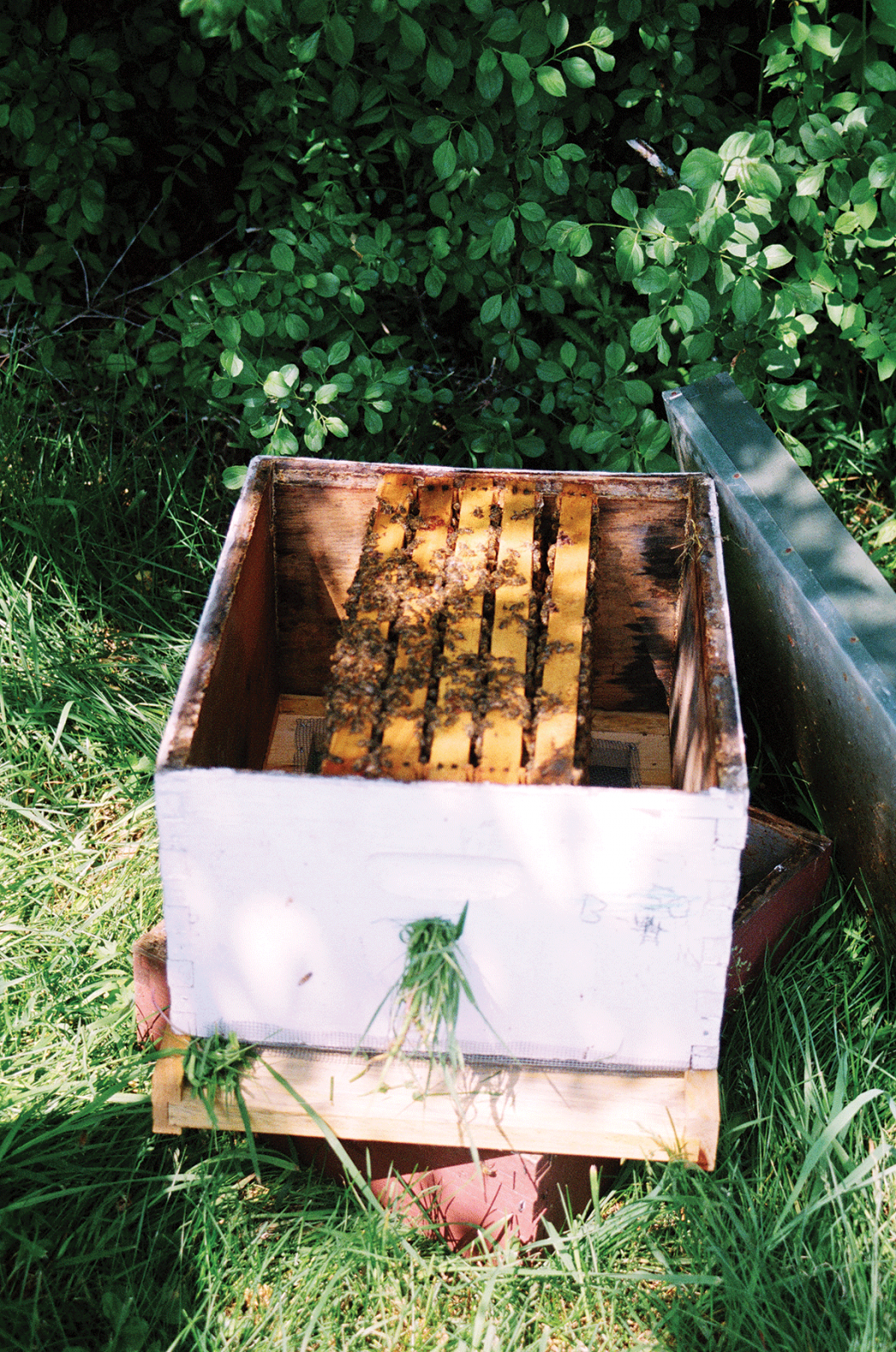A five-frame nucleus colony awaiting additional empty frames. Many beekeepers have turned to splitting hives and making nucs in an effort to make up for record colony losses.