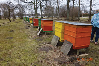Hives in Lolita's front yard