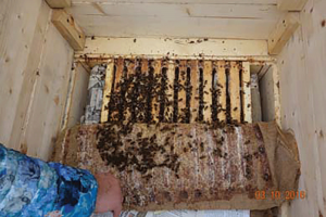 Interior of one of Lolita's hives