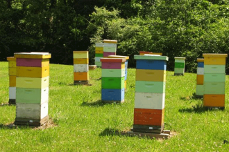 beehiveboxes-001