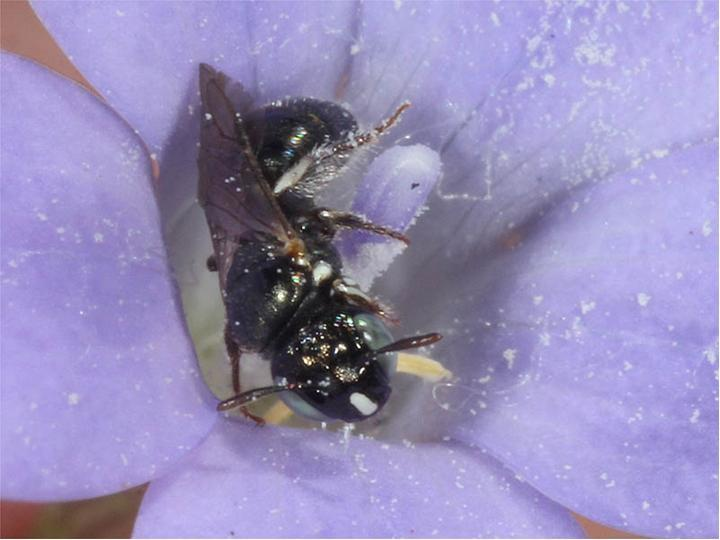 CATCH THE BUZZ – Bee populations expanded during global warming after the last Ice Age