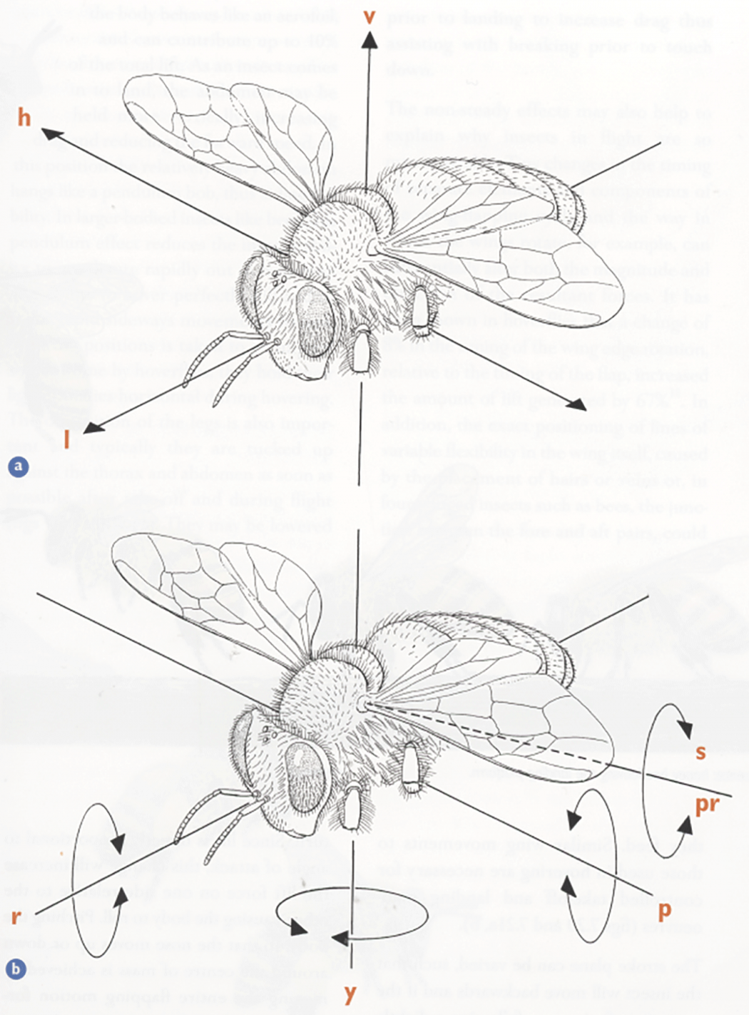A closer look bee culture diagram showing a the bees three axes of translational movement and b the rotation about them a vertical up and down lift v longitudinal ccuart Gallery