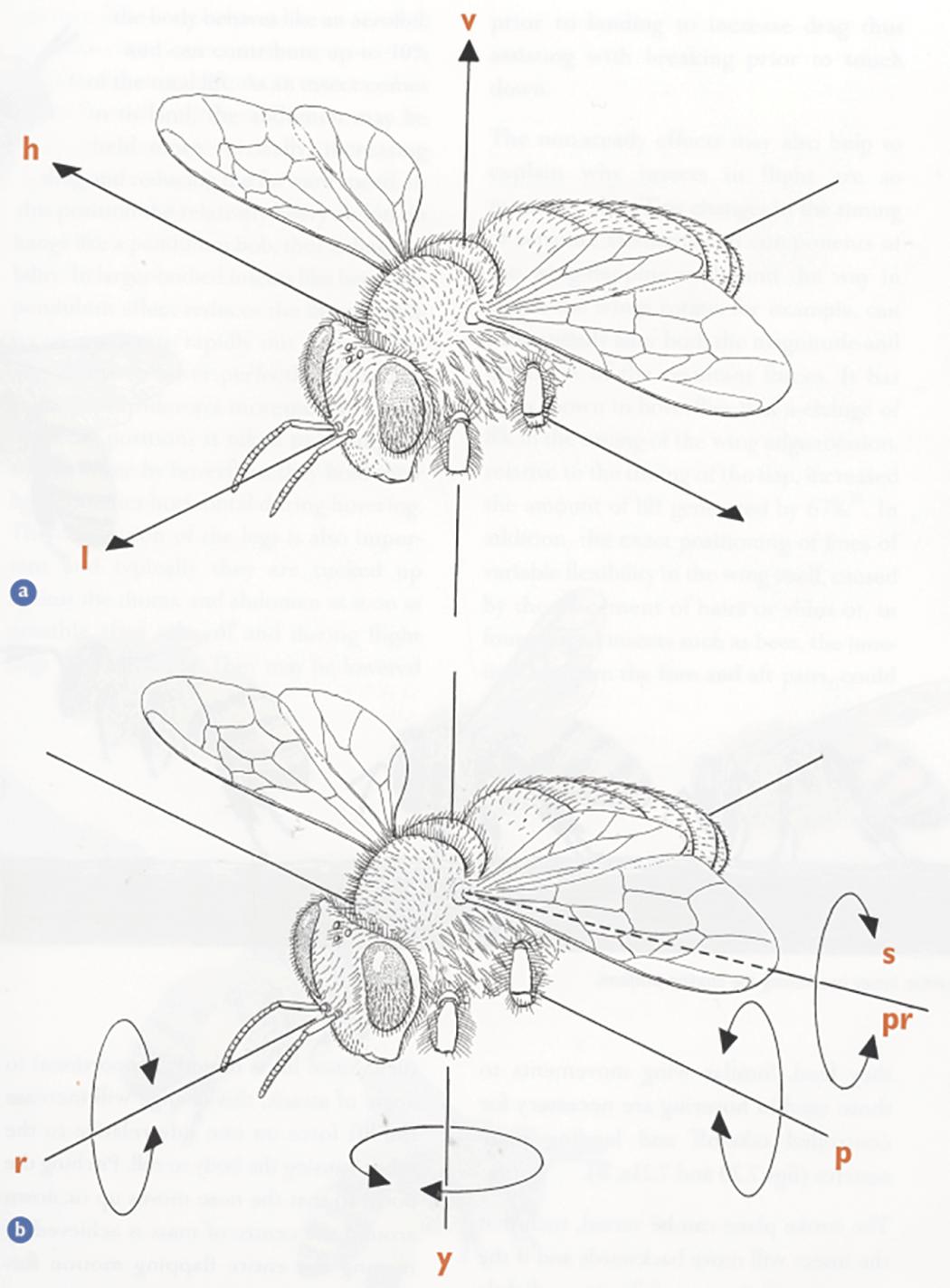 Bee Wing Diagram - Radio Wiring Diagram •