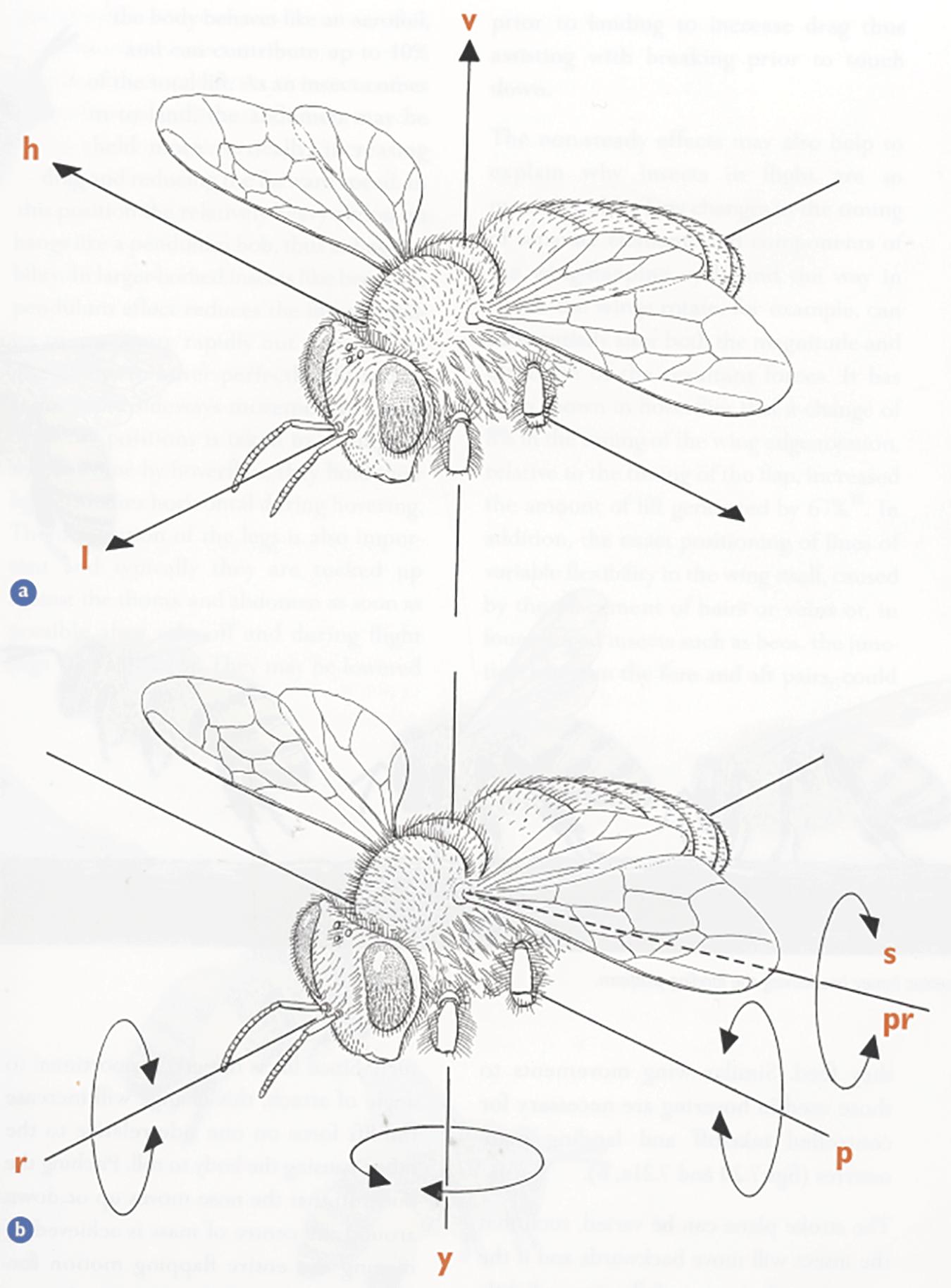 A Closer Look   Bee Culture