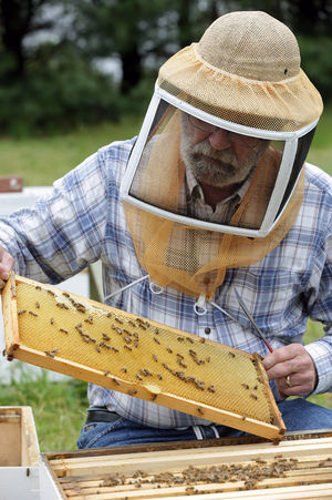 Ned Morgan, 62, president of South Jersey Beekeepers, checks the health of one of his many bee hives, Tuesday, May 3, 2016, in Deerfield Township, Cumberland County. A mild winter contributed to a statewide loss of 20 percent to 25 percent of bees, an improvement over the 35 percent loss of previous years. (Michael Ein/Staff Photographer)