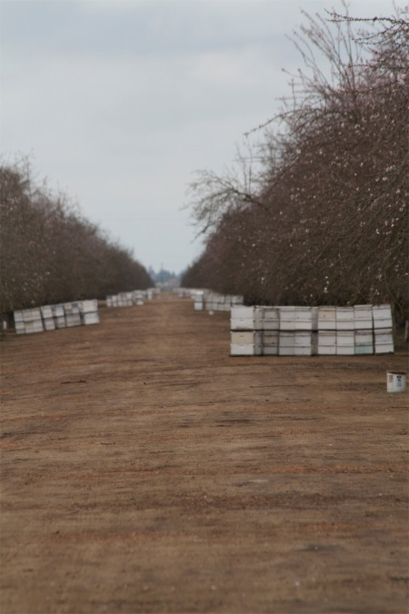 CATCH THE BUZZ – California almond forecast increases