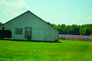A field of clary sage being used as a backyard.