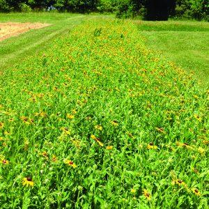 The wildflower buffer strip garden.