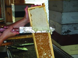 Harvest honey too late in the season and the honey in the comb may become crystalized, making it difficult to remove from the comb.