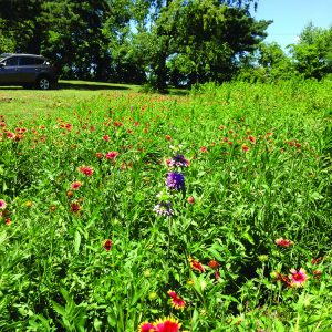 The Ernst Seed Garden, starting its second season.