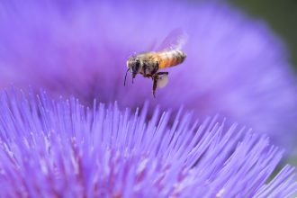 Photo submission from Bee Culture's June 2016 Photo Contest