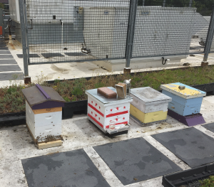 The DC Parks Urban Beekeeping Program apiary on the roof of a recreation center in Ward 6. The DC flag includes three red stars and a stripe! Beekeepers Quinn Libson and Joshua O'Rear got their first opportunty to keep bees in town through this program.