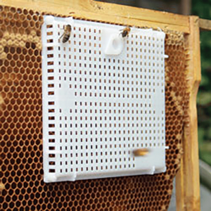Plastic and metal queen introduction cages (also called push-in cages) allow the beekeeper to put a queen over an area of emerging brood (or with nurse bees) and stimulate food exchange during introduction.