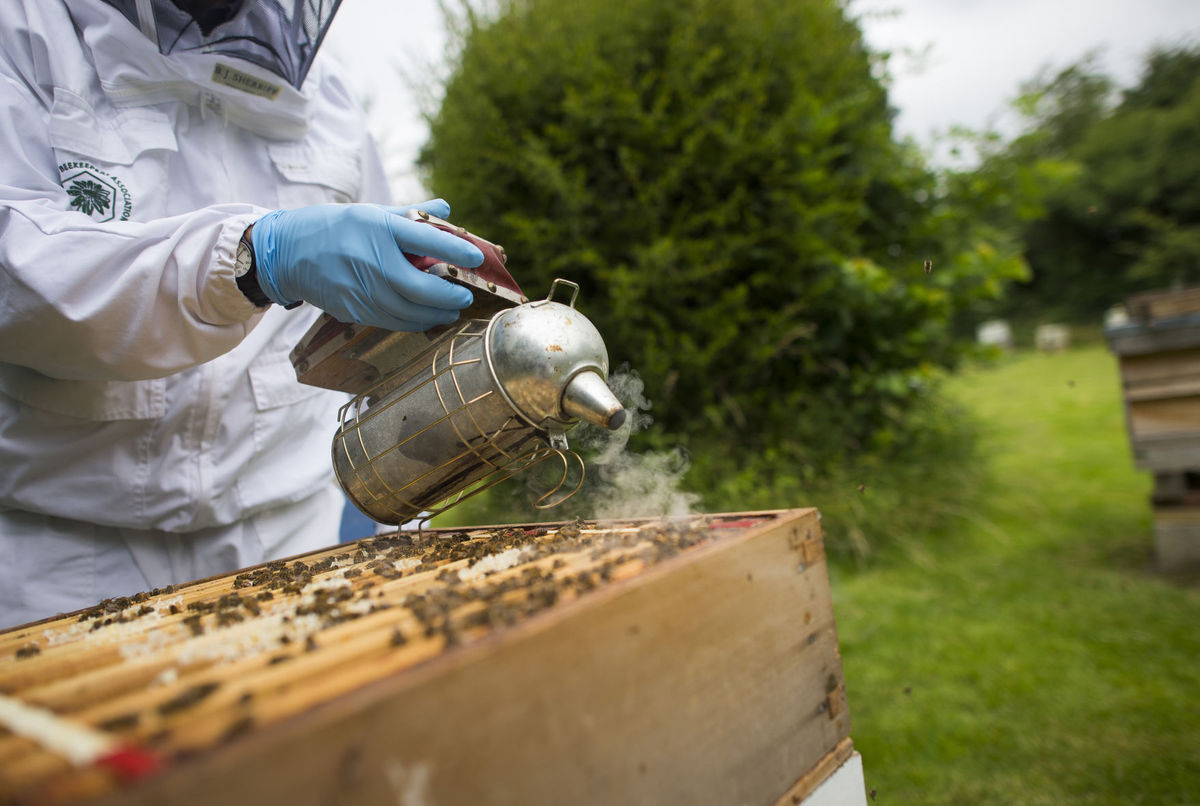 CATCH THE BUZZ – Brexit and England's honey bees