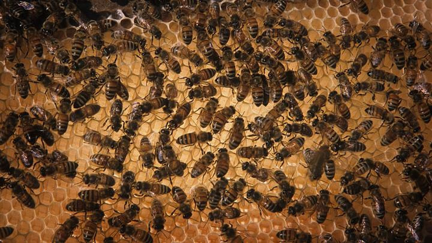 CATCH THE BUZZ – Bees On The Road Need More, and Better Food. We Knew That, But Here's Proof.