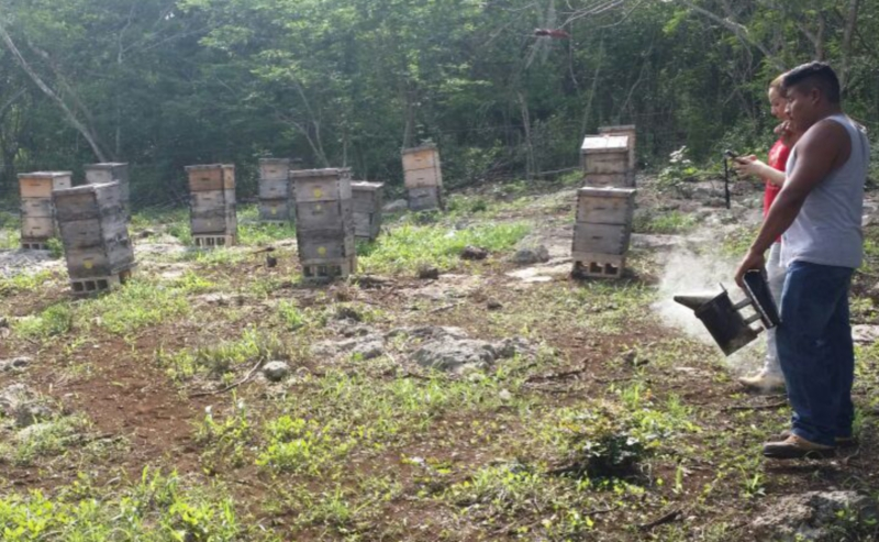 CATCH THE BUZZ – Yucatan Honey Production drops by 70% due to weather