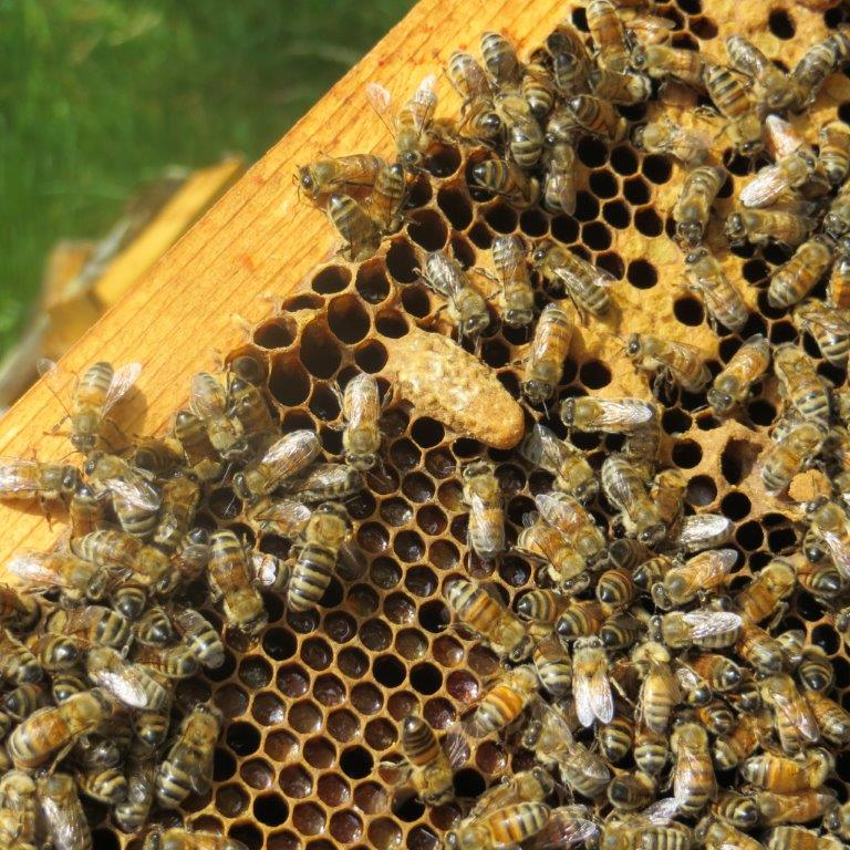 beekeeping essay contest Beekeeping essay contest — allows 4-hers to use their writing and research skills in developing an essay on a beekeeping related topic cash awards are available to winners on the national level.