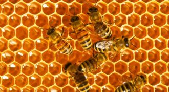 bees-honey