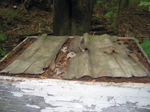 The remains of the plywood transportation outer cover repaired with propolis.