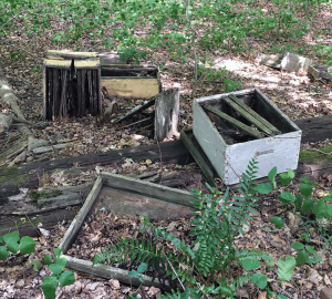 The end of the survivor hive. Approximately 34 years without a beekeeper.