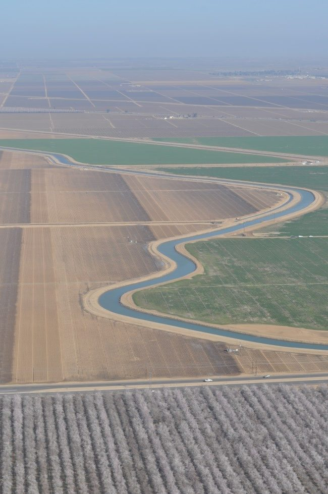 CATCH THE BUZZ – Almond industry slams land use study for inaccuracies