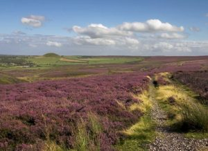 CATCH THE BUZZ – Scotland's heather honey crop a bust this year.