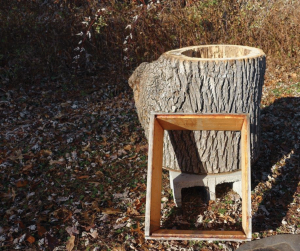 With the physical comparison between a single deep box and a bee tree, it's easy to see that there's little insulation value in a thin box compared to the mass of a tree.