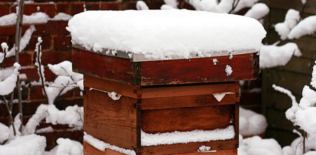eb2208372ba17 Winter Management | Bee Culture