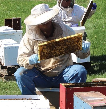Veterinarian Chris Cripps works with bees. Photo courtesy of Chris Cripps.