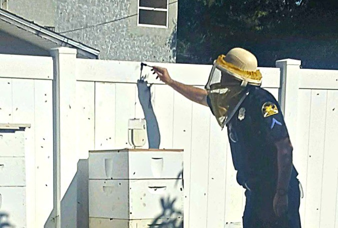 CATCH THE BUZZ – Two would-be burglars break-in attempt foiled by their intended victims' beehives.