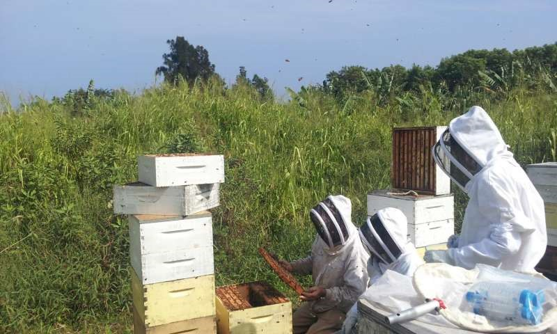 CATCH THE BUZZ – Hawaiian Study highlights a new threat to bees worldwide