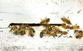 photodune-1457263-group-of-honeybees-on-a-vintage-beehive-m-1024x635