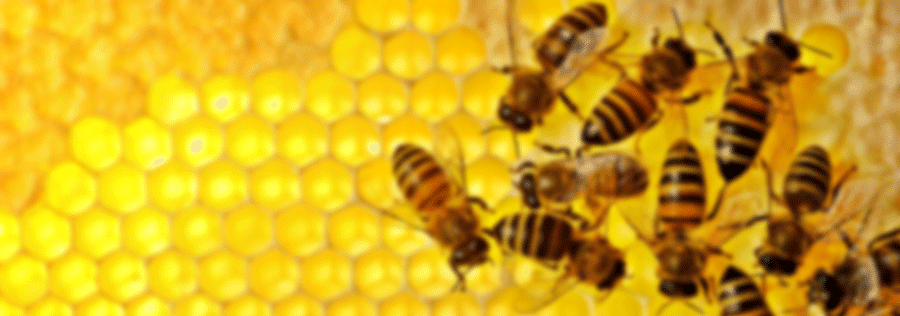 North Carolina State Beekeepers Association | Bee Culture