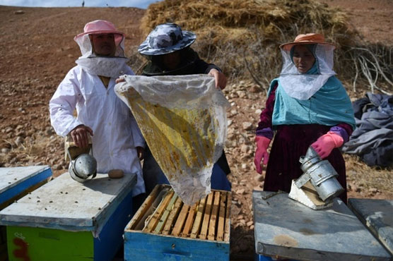 CATCH THE BUZZ – Queen bees: How honey co-ops help Afghan women take control