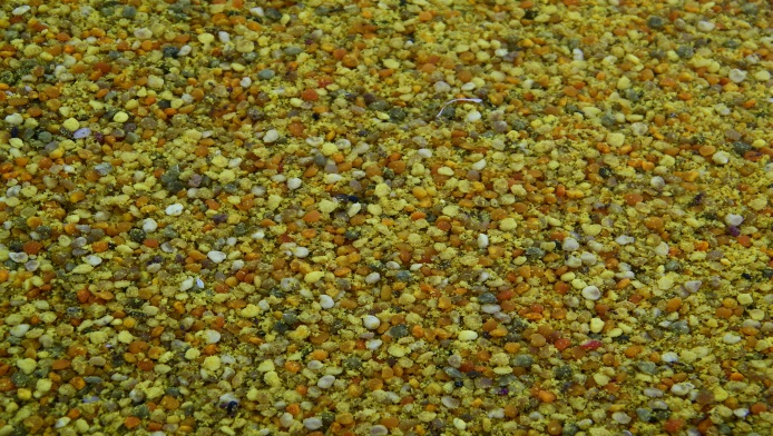 CATCH THE BUZZ – Municipality of Sergipe, in Brazil, produces three tons light colored, sweet tasting coconut palm pollen per year