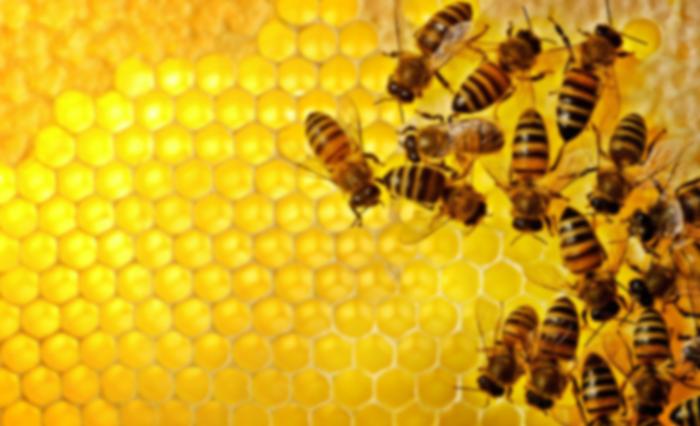 Bees Gang Bang