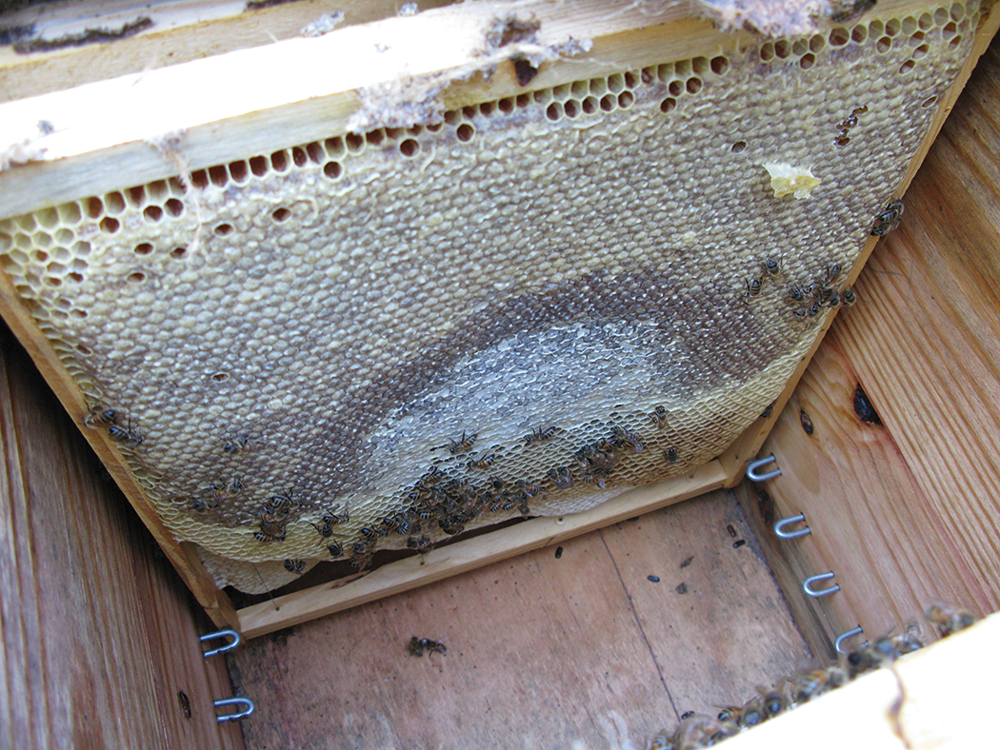 The Layens Hive   Bee Culture