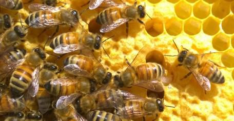 honey bee biology and beekeeping dewey caron pdf