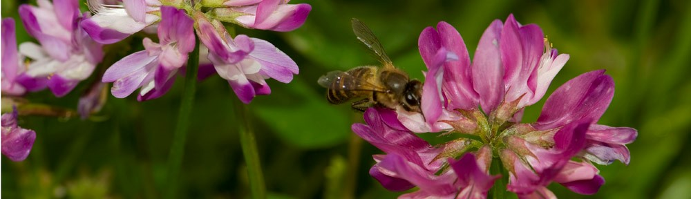 CATCH THE BUZZ – American Bee Research Conference 2017. A Short Report.
