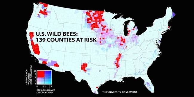 CATCH THE BUZZ – The first-ever map tracking U.S. wild bees suggests they are disappearing and if this continues, it could hurt U.S. crop production and raise farmers' costs.